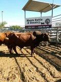 澳洲肉牛交易中心