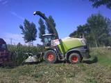 克拉斯收割機-青貯玉米收割2